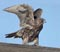 South Dakota Birds and Birding - Gyrfalcon Logo