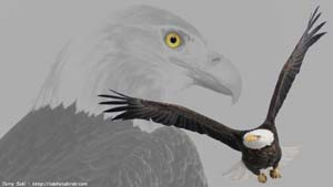 Bald Eagle Composite - Screen Background