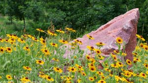 Quartzite and Wildflowers - Screen Background