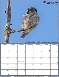 February 2017 Calendar - Northern Hawk Owl