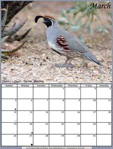 March 2017 Calendar - Gambel's Quail