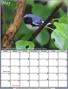 May 2017 Calendar - Black-throated Blue Warbler