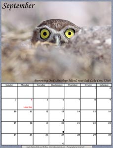September 2017 Calendar - Burrowing Owl