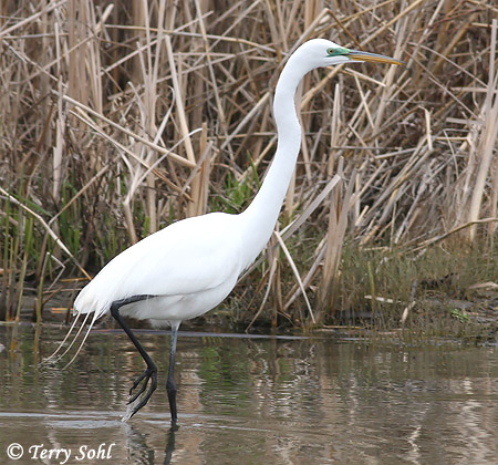 "a white heron essay 2 Free white heron papers  ""once more to the lake"" is an essay that is derived mostly from white's personal experience while ""the ring of time"" is mostly ."