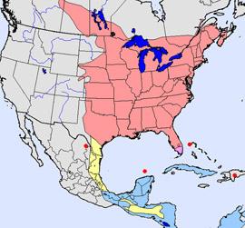 Bird Range Map Quiz  Flycatchers - Eastern us map quiz