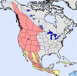 Western North America Map.Bird Range Map Quiz 4 Flycatchers