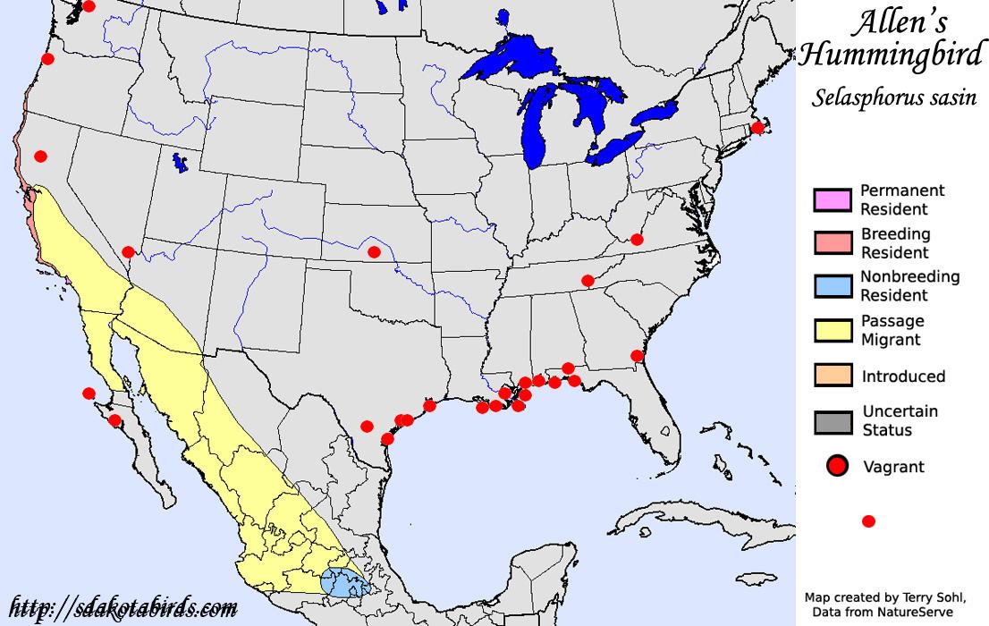 Allens Hummingbird Species Range Map