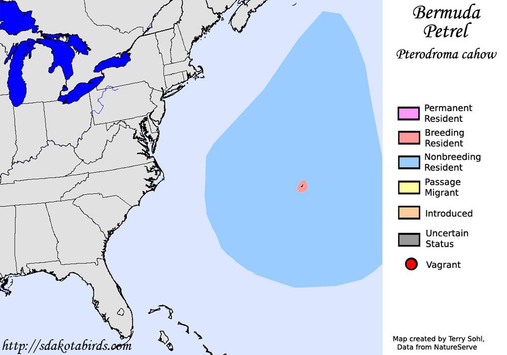 bermuda petrel north american range map