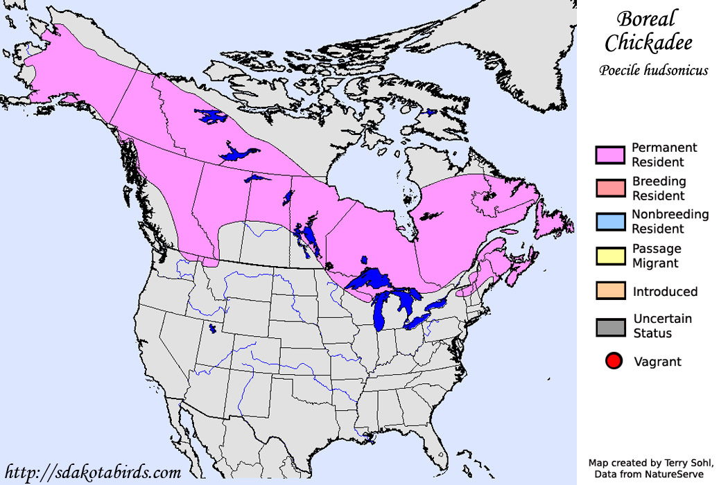 Image result for boreal chickadee range