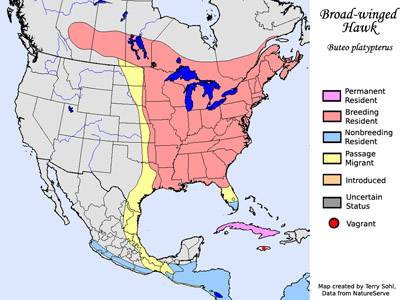 Broad-winged Hawk - Range Map