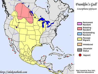 Franklin's Gull - Range Map