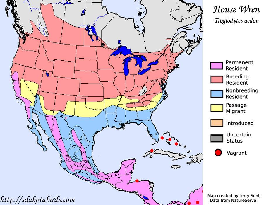 House Wren - South Dakota Birds and Birding