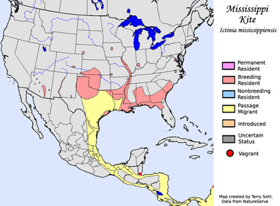 Mississippi Kite South Dakota Birds - Map of south mississippi